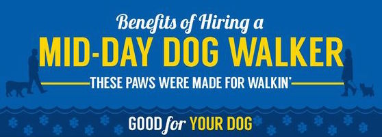 Benefits of Hiring a Mid-Day Dog Walker Infographic