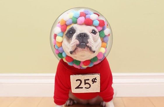 Gumball Machine Dog Costume