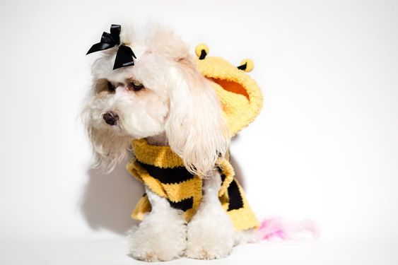 Bumble Bee Costume for Dogs