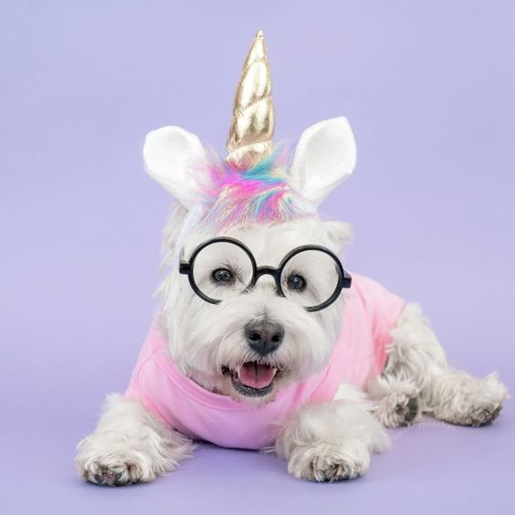 Unicorn Dog Halloween Costume