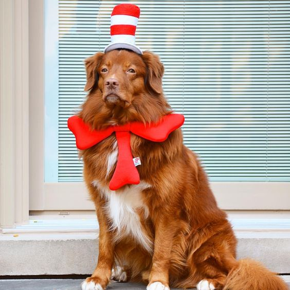 Dr. Seuss Dog Costume
