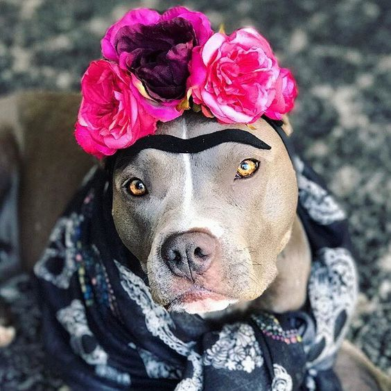 Frida Kahlo Dog Costume