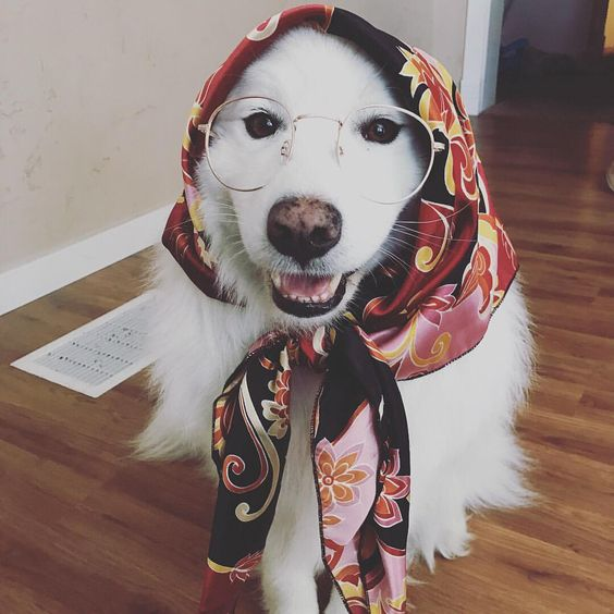 Grandma Dog Costume