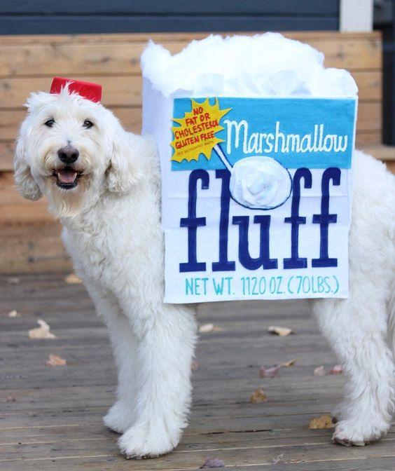 Marshmallow Fluff Halloween Dog Costume
