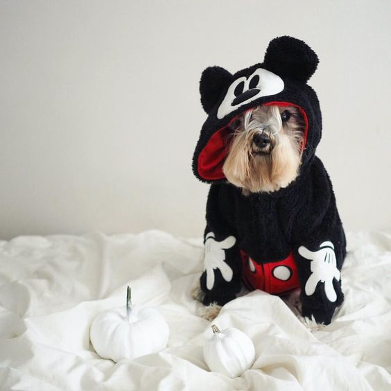 Mickey Mouse Dog Halloween Costume