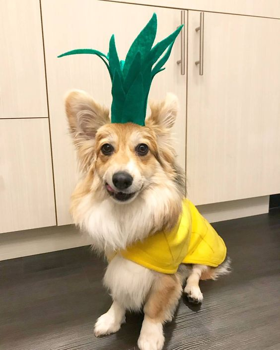 Pineapple Dog Halloween Costume