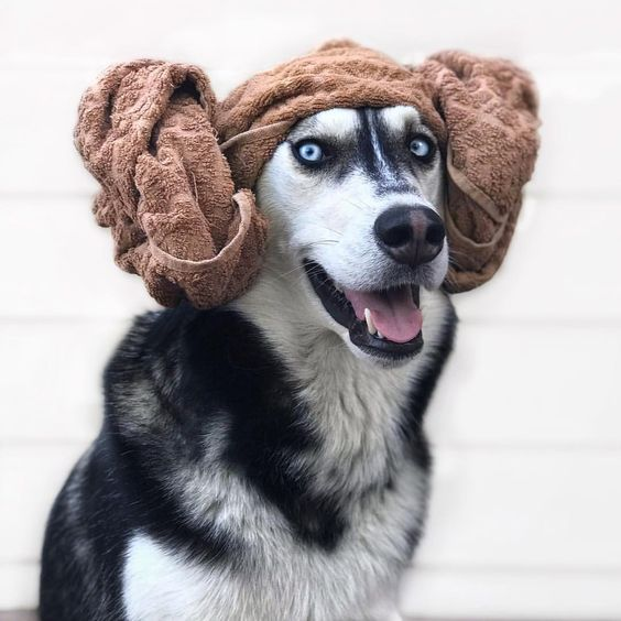 Princess Leia Dog Costume for Halloween