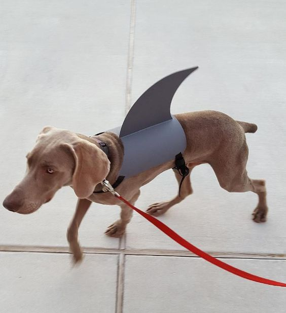 Shark Dog Halloween Costume