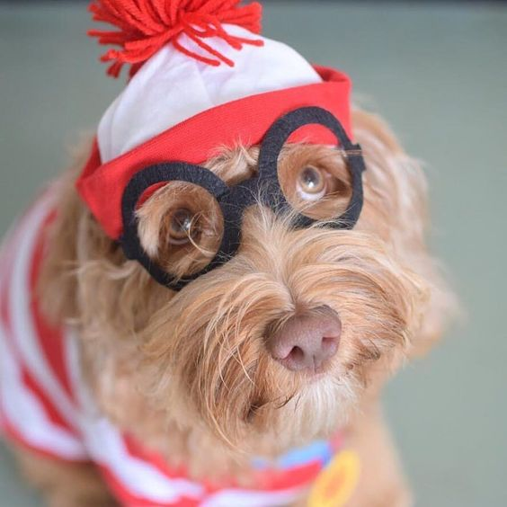 Where's Waldo? Dog Halloween Costume