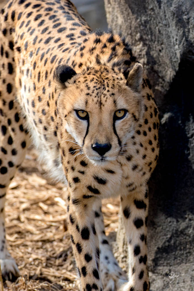 Zoo-24.jpg