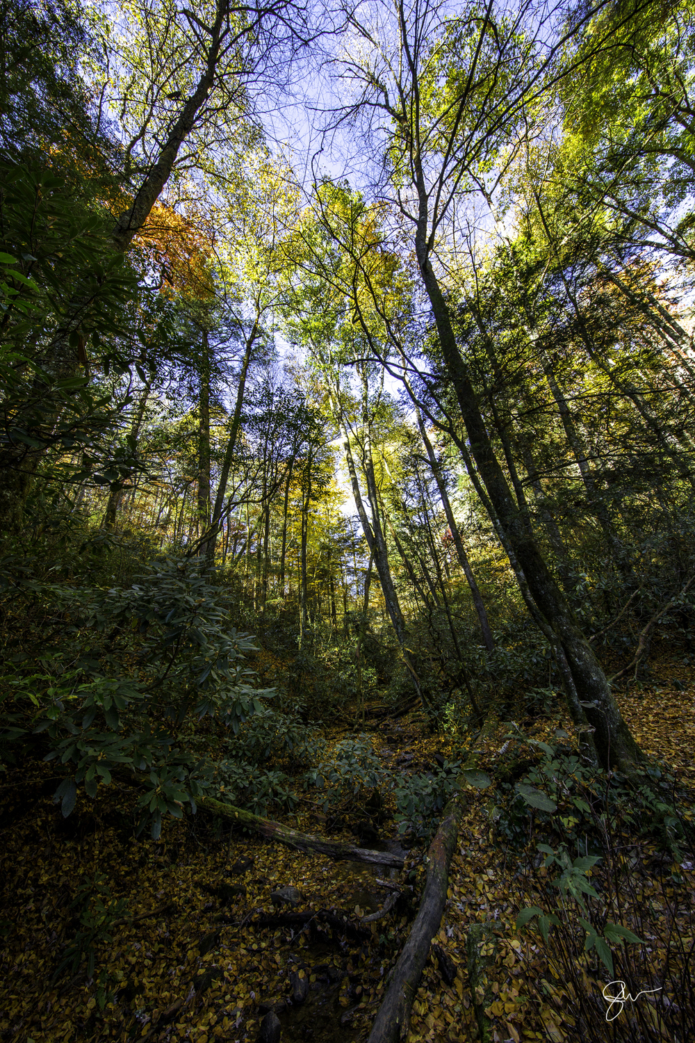 2015 NC Fall Color-17.jpg