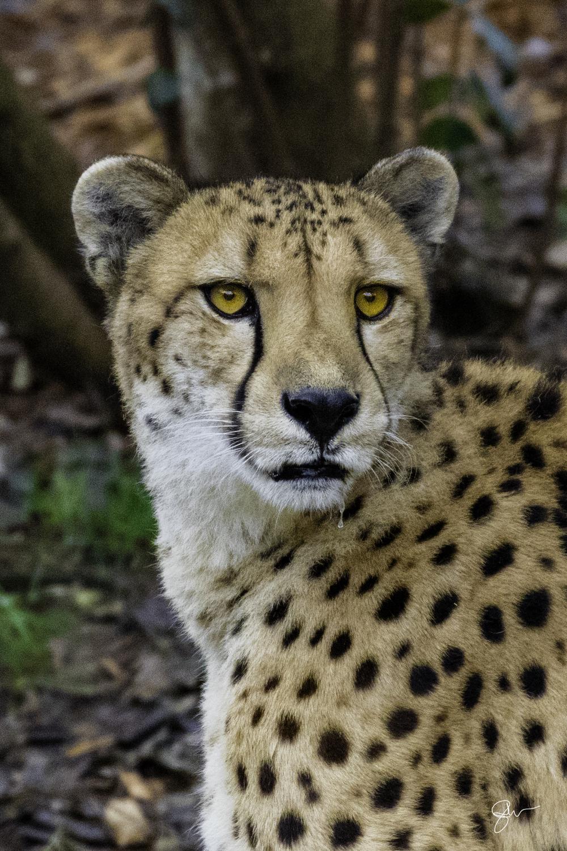 2015 Dec at Zoo-6.jpg