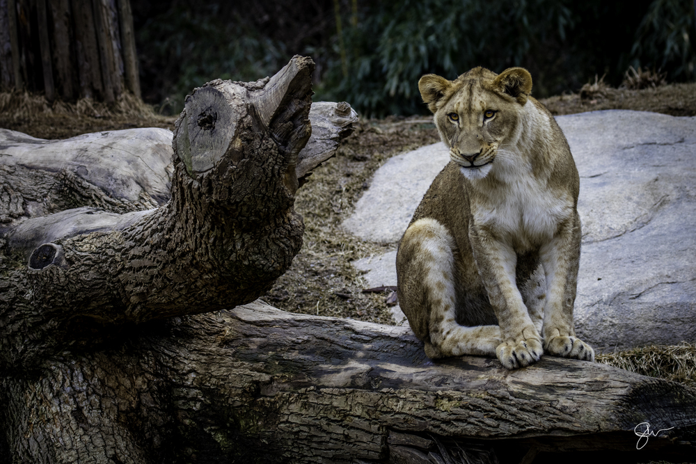 2015 Dec at Zoo-7.jpg