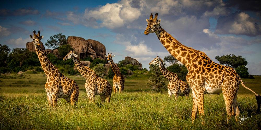 2017 Africa 5x10-1.jpg