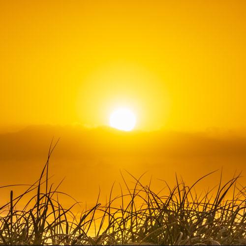 sunrise500.jpg