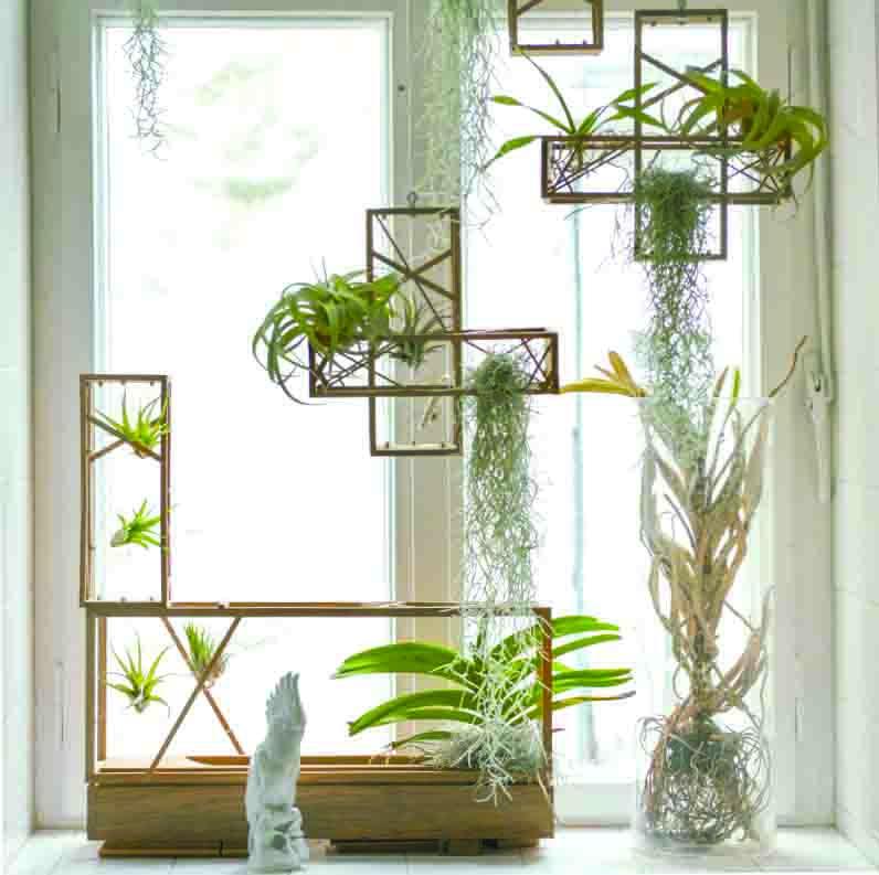 freunde-von-freunden-shop-plants-in-the-city-MOD.jpg