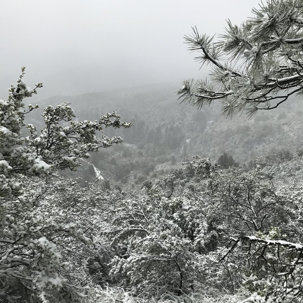 mount-laguna-blizzard-pct-2017.JPG