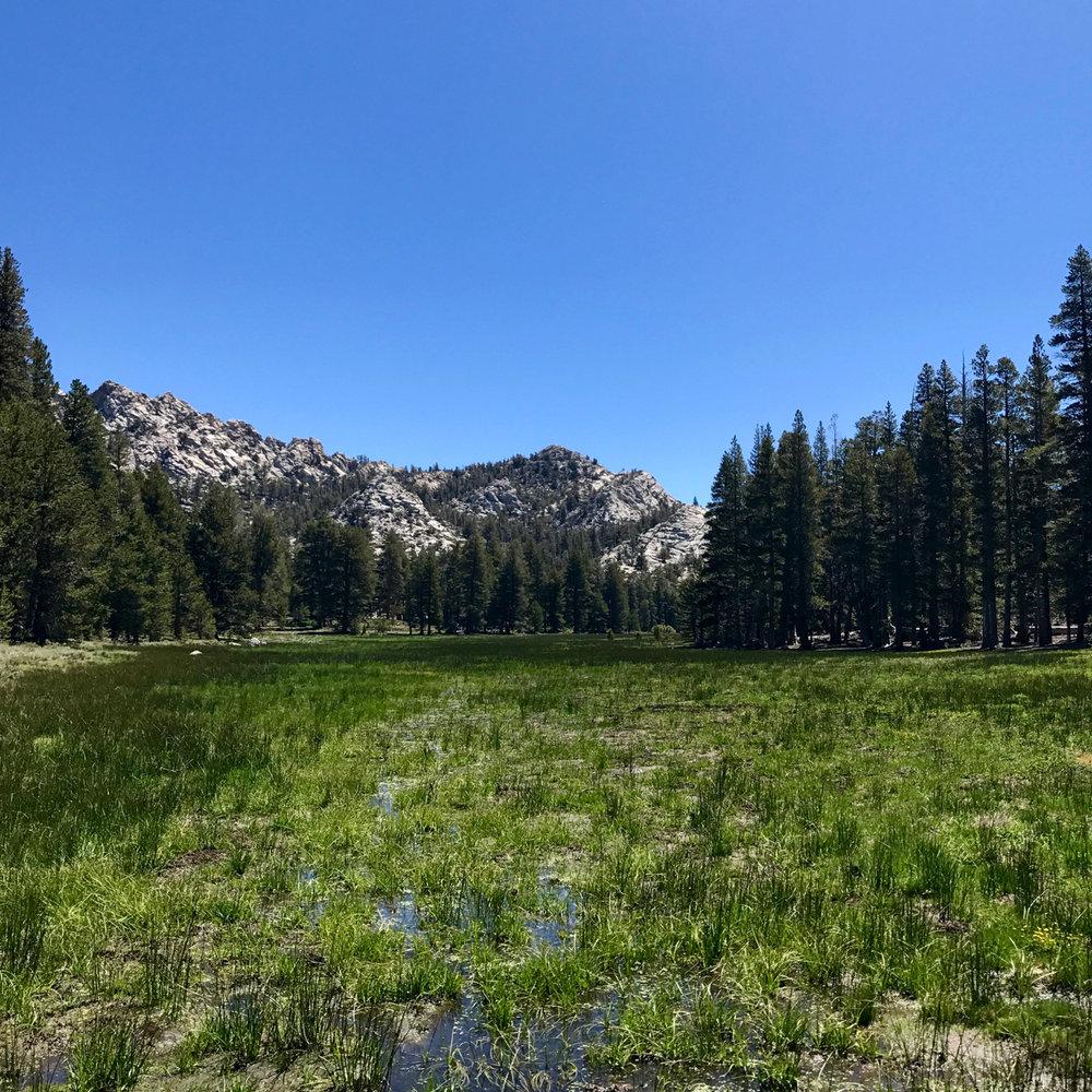 sierra-meadow-day-2-june-16.jpg