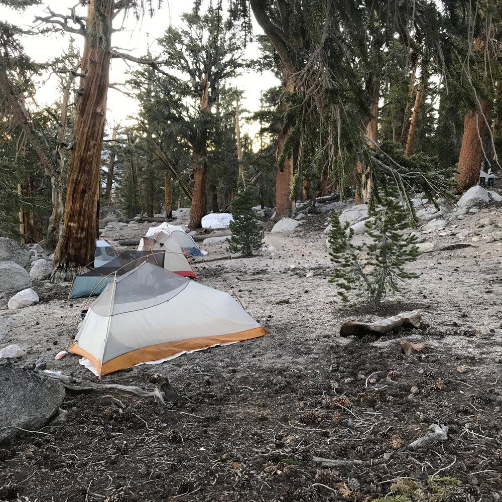 sierra-june-17-campsite-pct.jpg
