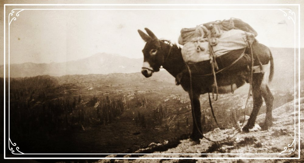 This burro is packing in supplies for the Colorado Mountain Club's 1916 Wild Basin Outing. CMC Archives.