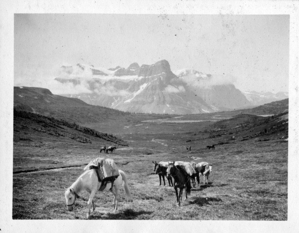 Castleguard Pass - First Decent, with horses, of Saskatchewan Glacier (7-16-23)  J. Monroe Thorington Scrapbook.