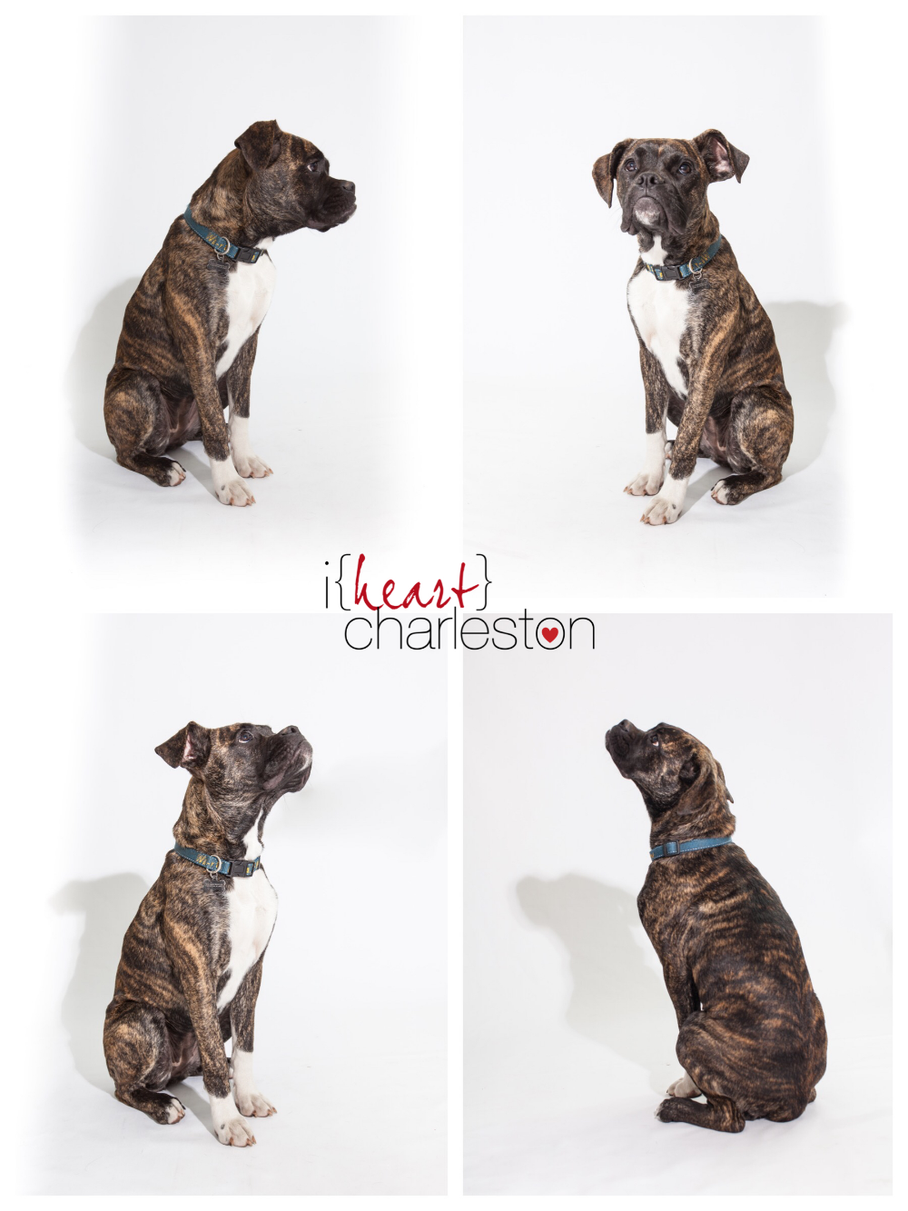 iheartcharleston family pet photos march 2016