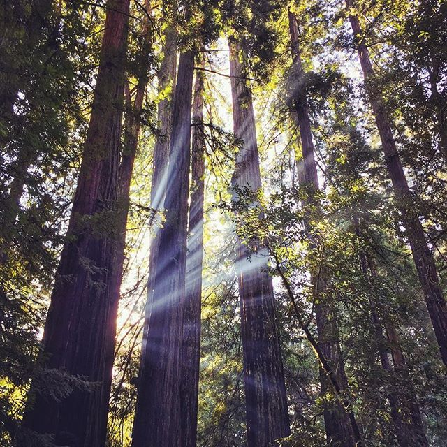 #goinggoingbackbacktocalicali #muirwoods #jesuslight #friday 🌲🌲🌲🌲🌲