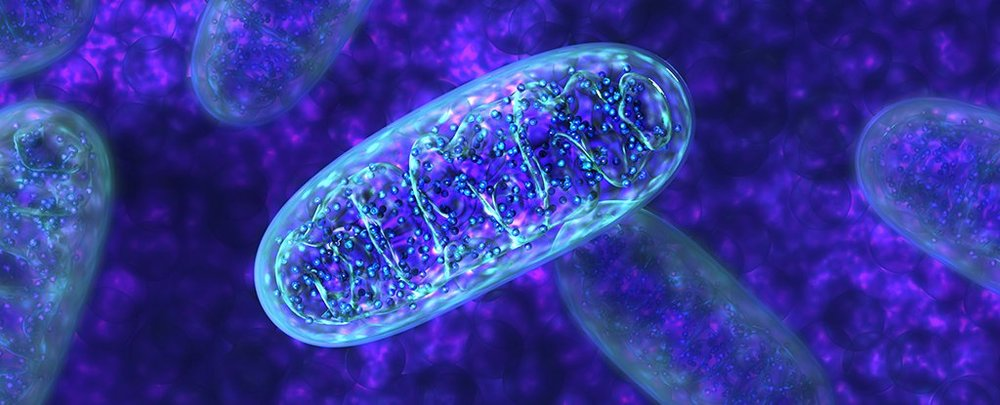 Picture of several mitochondria.