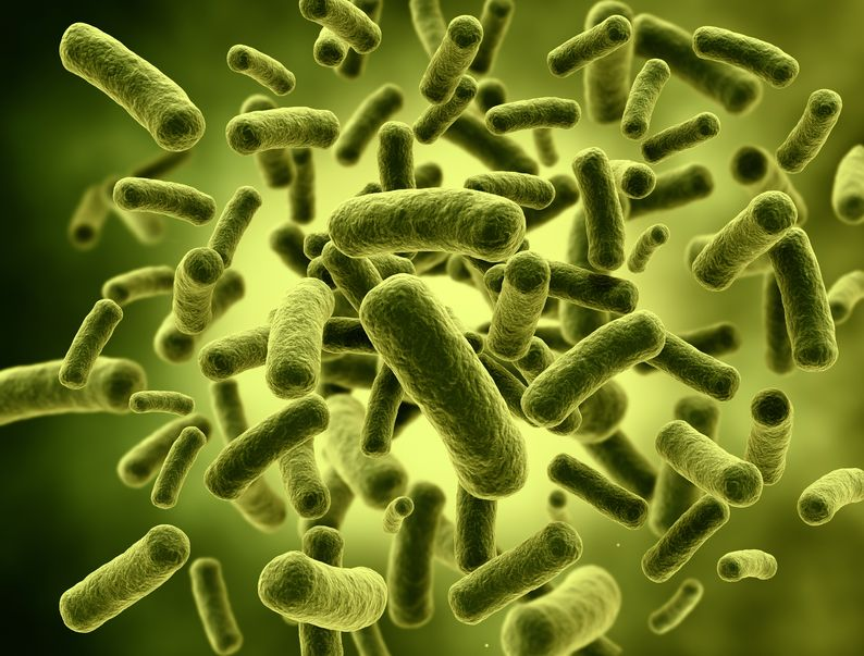 Gut bacteria. Improving gut health can prevent and reverse cognitive decline and dementia.