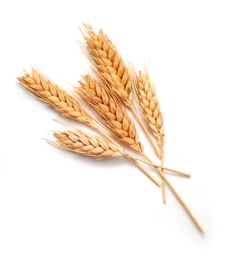 Wheat can contribute to mental illnesses.