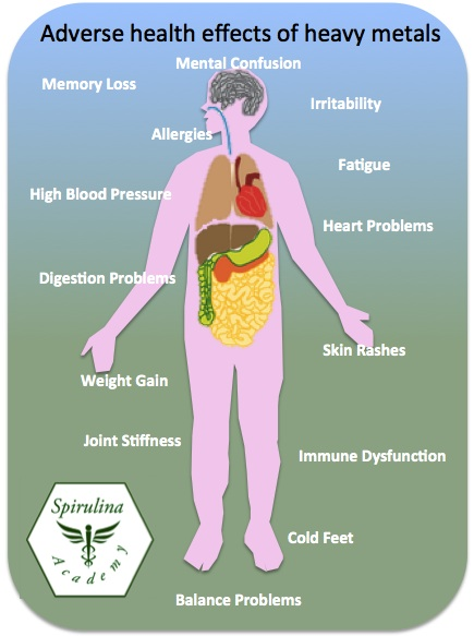 A diagram demonstrating the negative effects of heavy metals on the body. Regular sauna use can help your body excrete heavy metals.