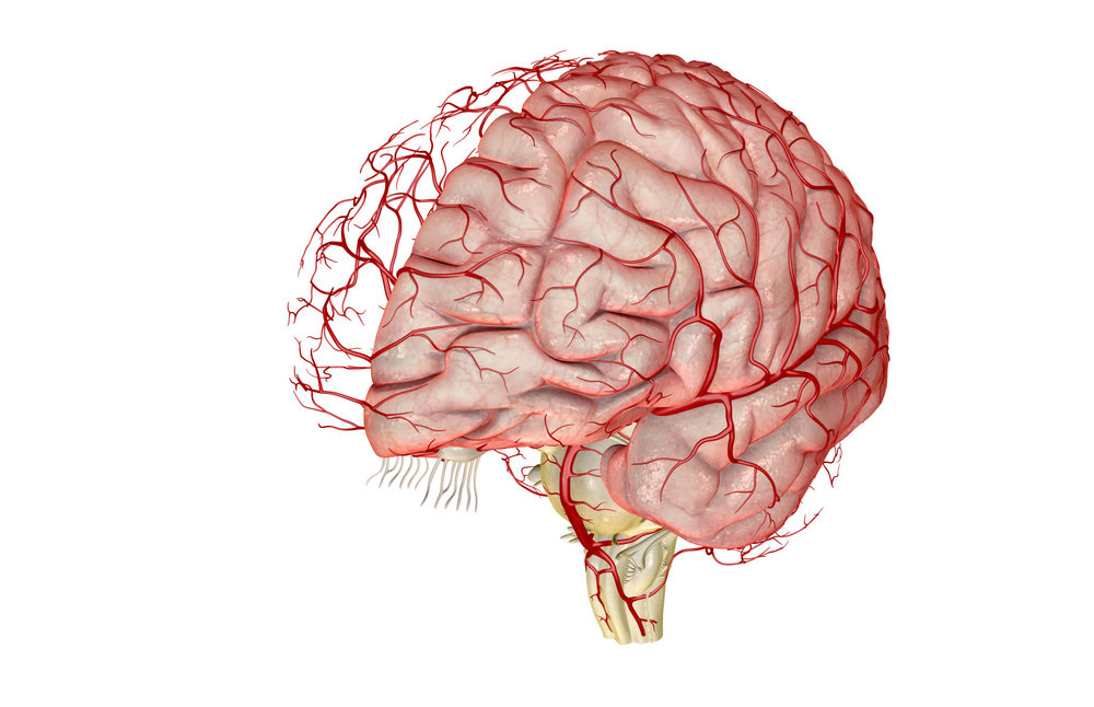 An illustration of a brain and blood flowing throughout it. Blood flow to the brain is essential if you want to reverse brain damage.