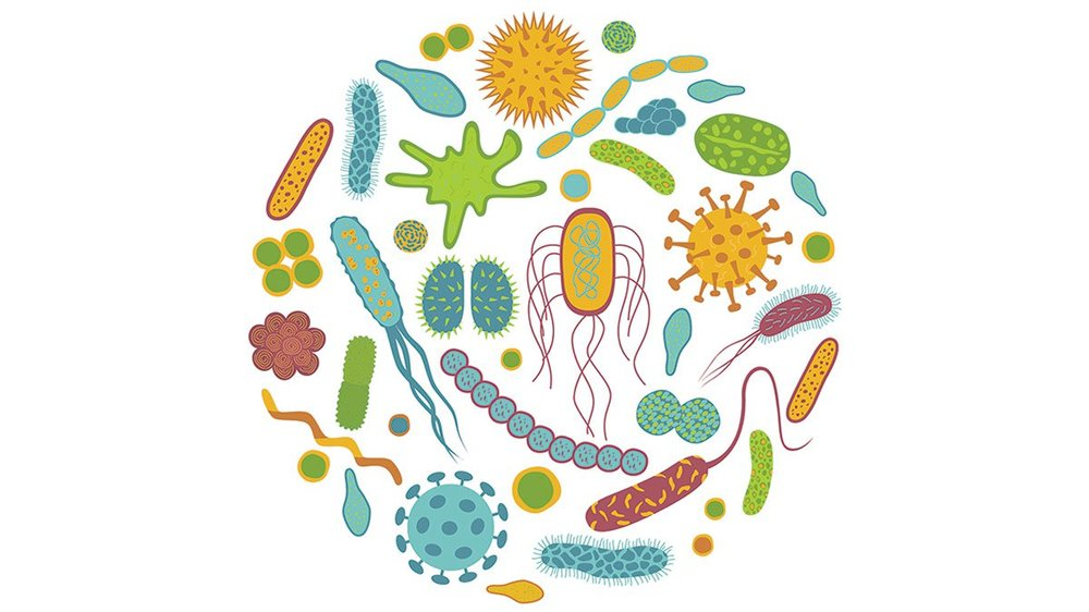 An image of different cartoon bacteria.