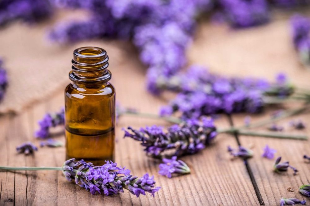 A small bottle of Lavender oil surrounded by plants. Lavender reduces anxiety and stress.