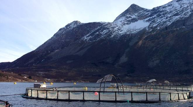 Norway Salmon Farm.jpeg