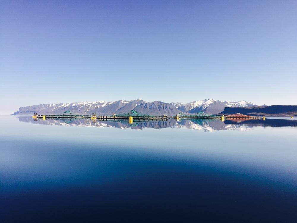 Arnarfjördur, Iceland