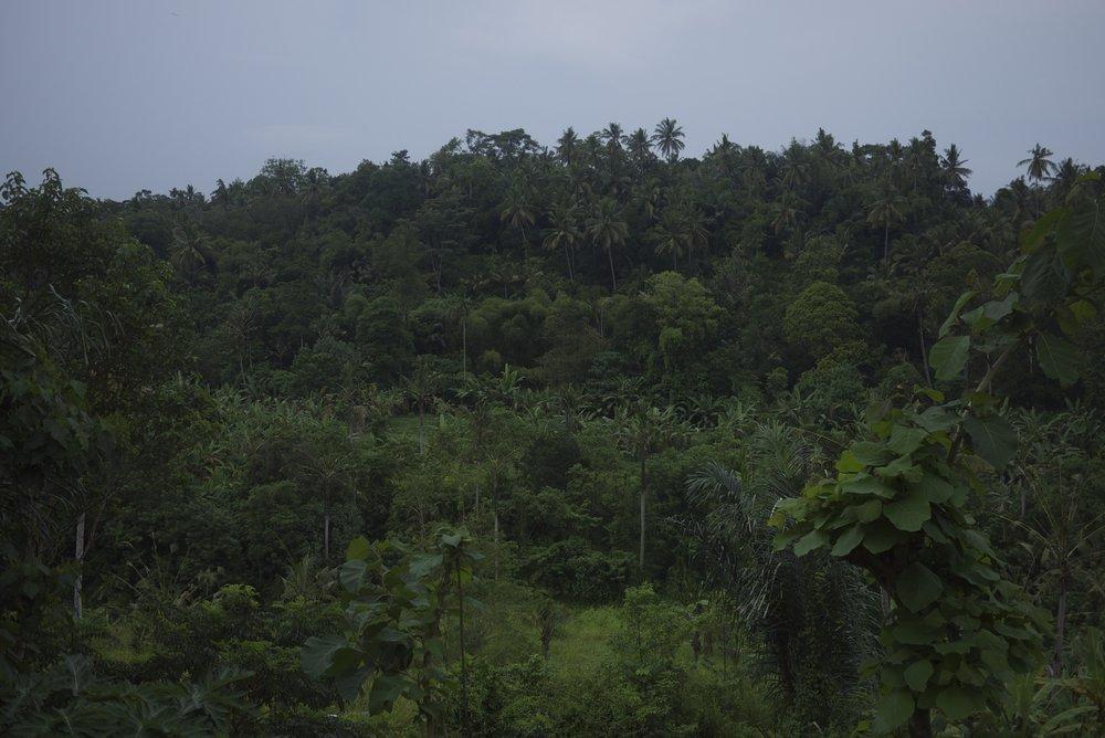 P1100905_Bali_Ubud.jpg