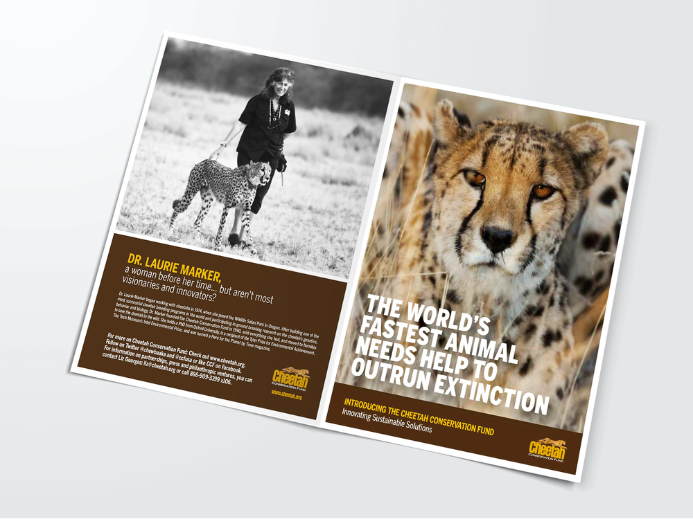 Cheetah_Portfolio_Cover_SQR.jpg