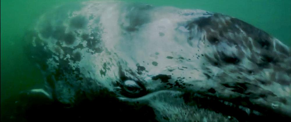 gray-whale-2.jpg