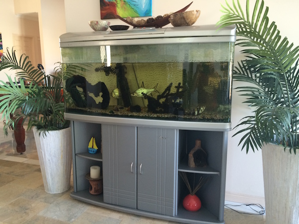 Fish tanks need to be covered during pest control treatments