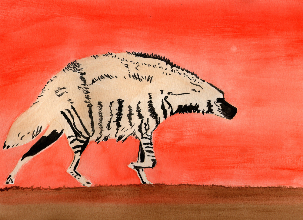 Striped Hyena   2005, water color by Vanessa Renwick   included in the Dissappearing Book by Melody Owen