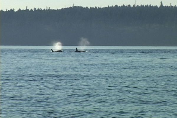 whales_lg.jpg