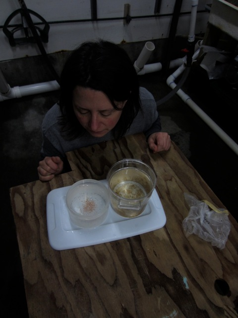 Vanessa looking at the baby jellyfish at the Oregon Coast Aquarium while we were filming