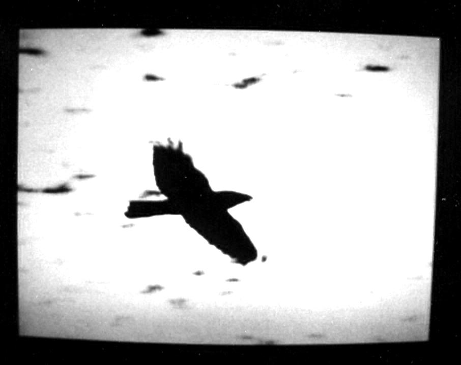 crow_2psd_blowup.jpg