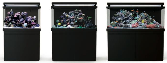 Red-Sea-Max-S-Aquarium-Lineup.png