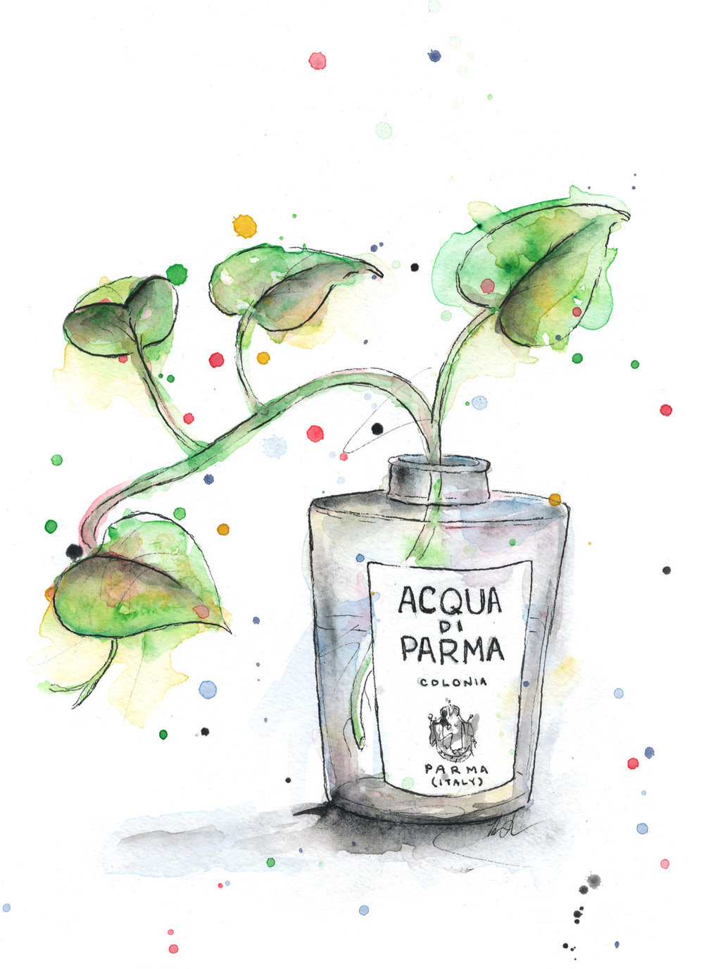 Benjamin-Edward-Acqua-Di-Parma-Colonia-Plant-Propogation-Pathos-watercolour-illustration.jpg