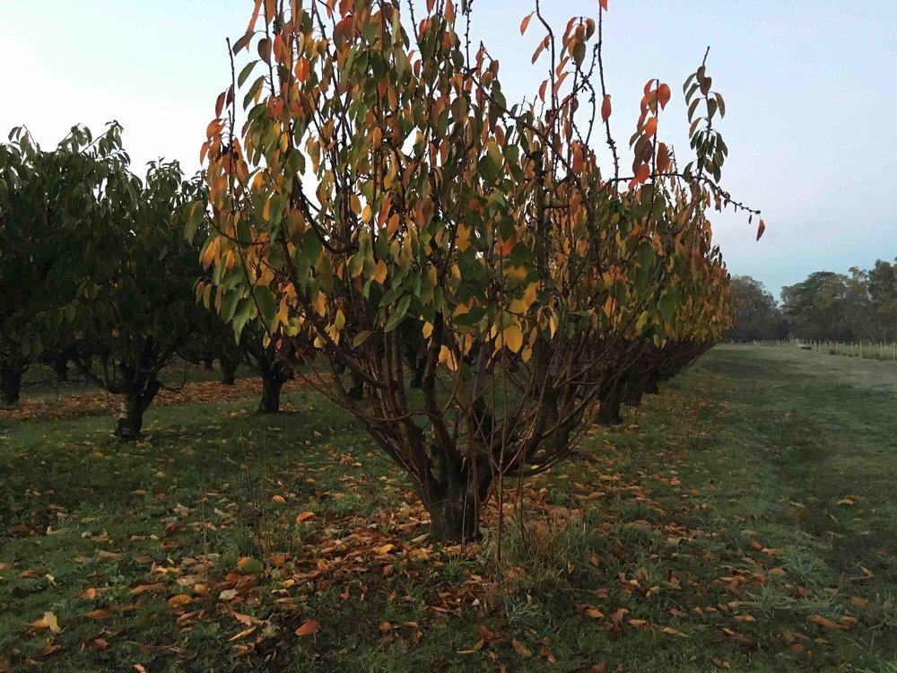 Farm orchard.jpeg