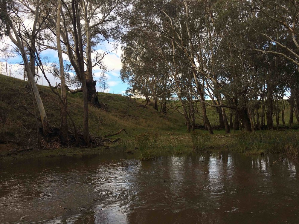 Farm river.jpeg