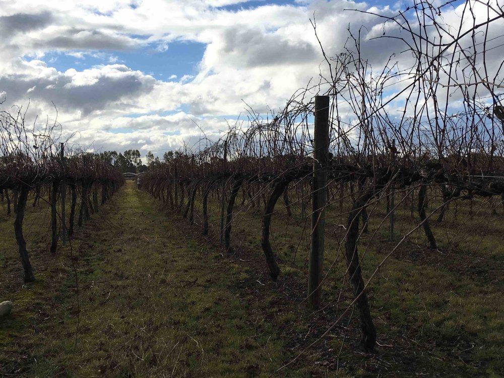 Farm through the vineyard.jpeg