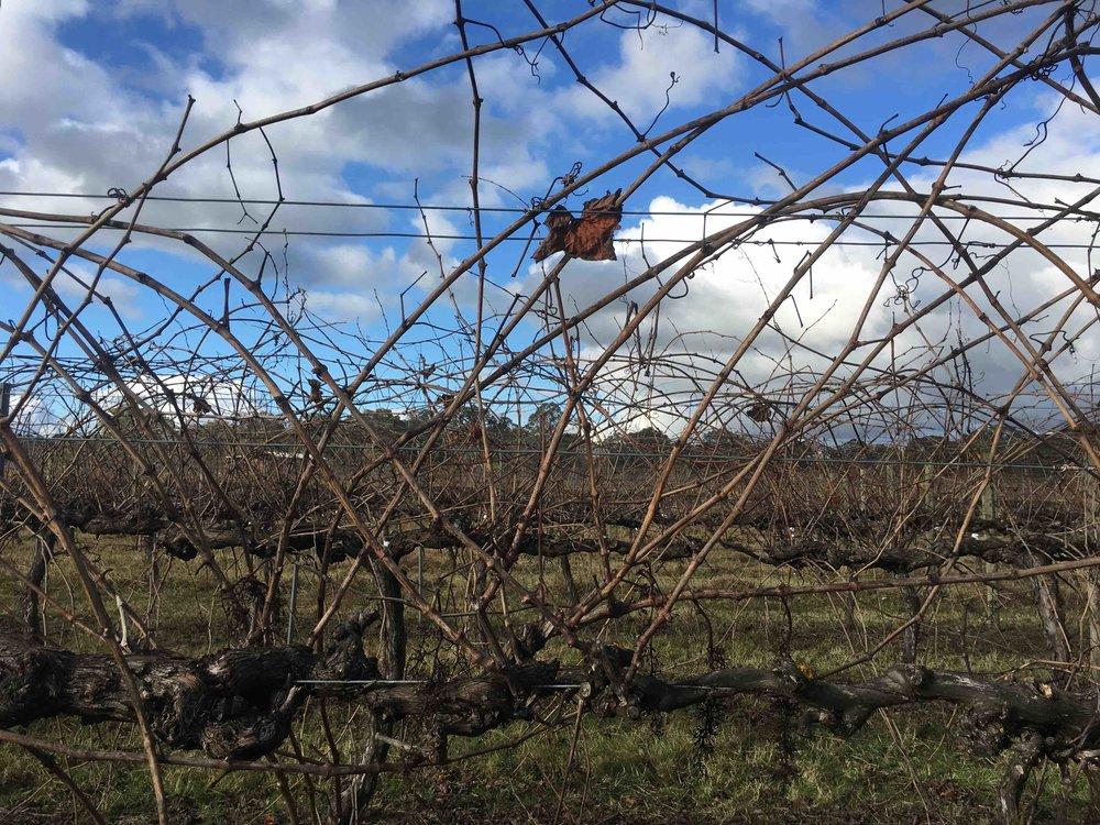 Farm vineyard sky.jpeg